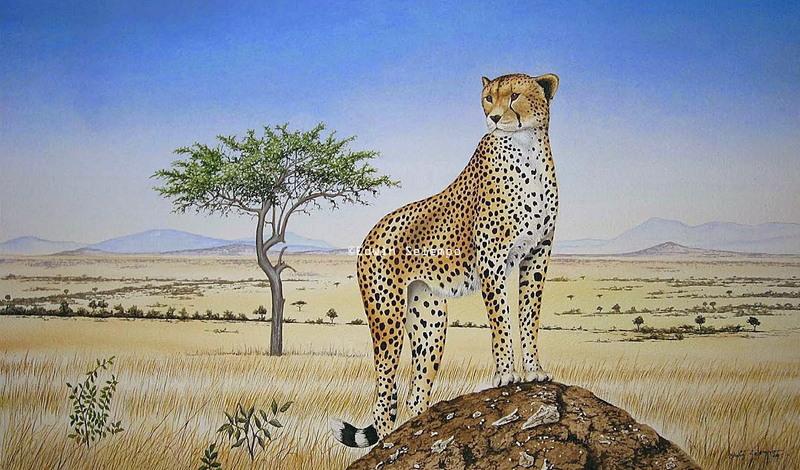 Cheetah on termite hill