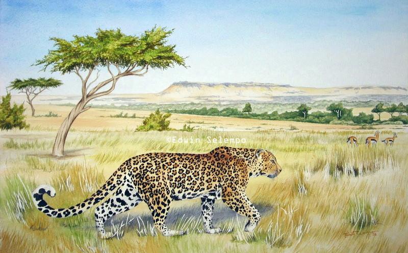 Leopard in the Mara (2)
