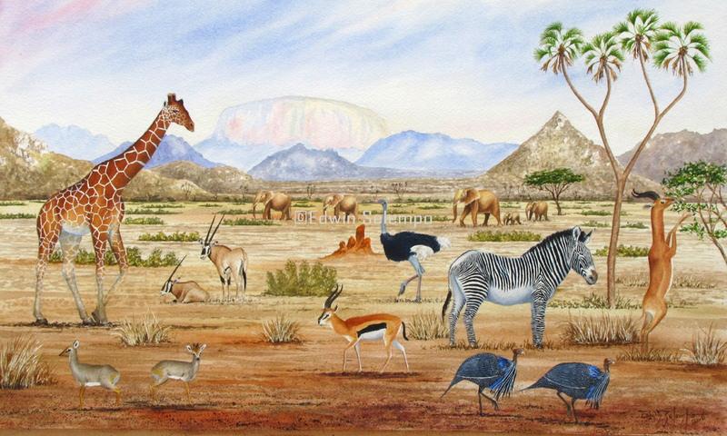 Samburu Big five (3)