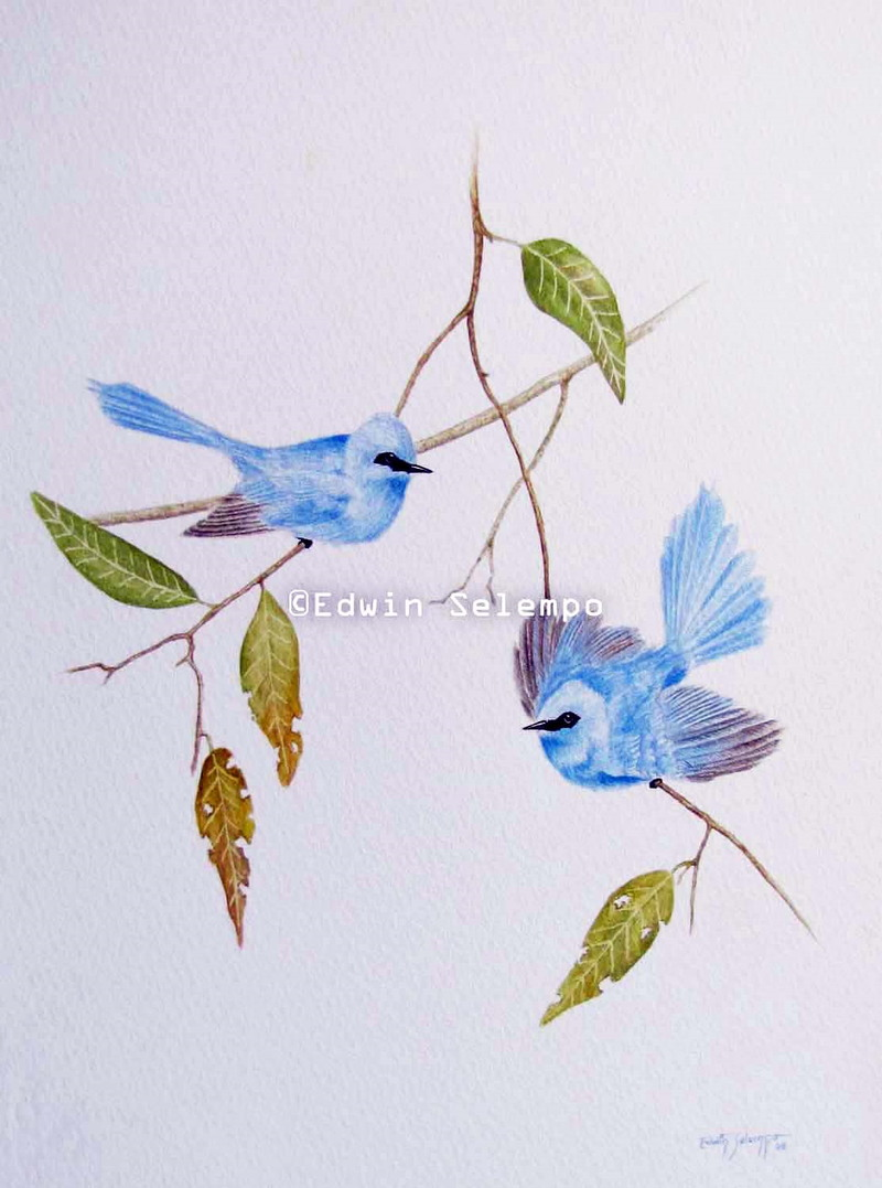 Blue Flycatchers