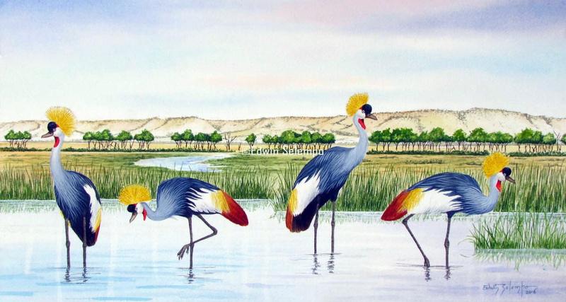 Crowned Cranes Mara-musiara