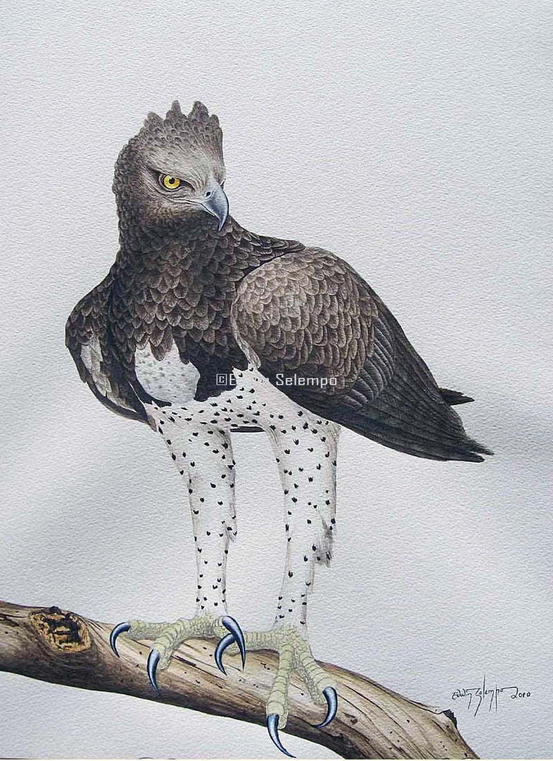 Eagle Martial (1)