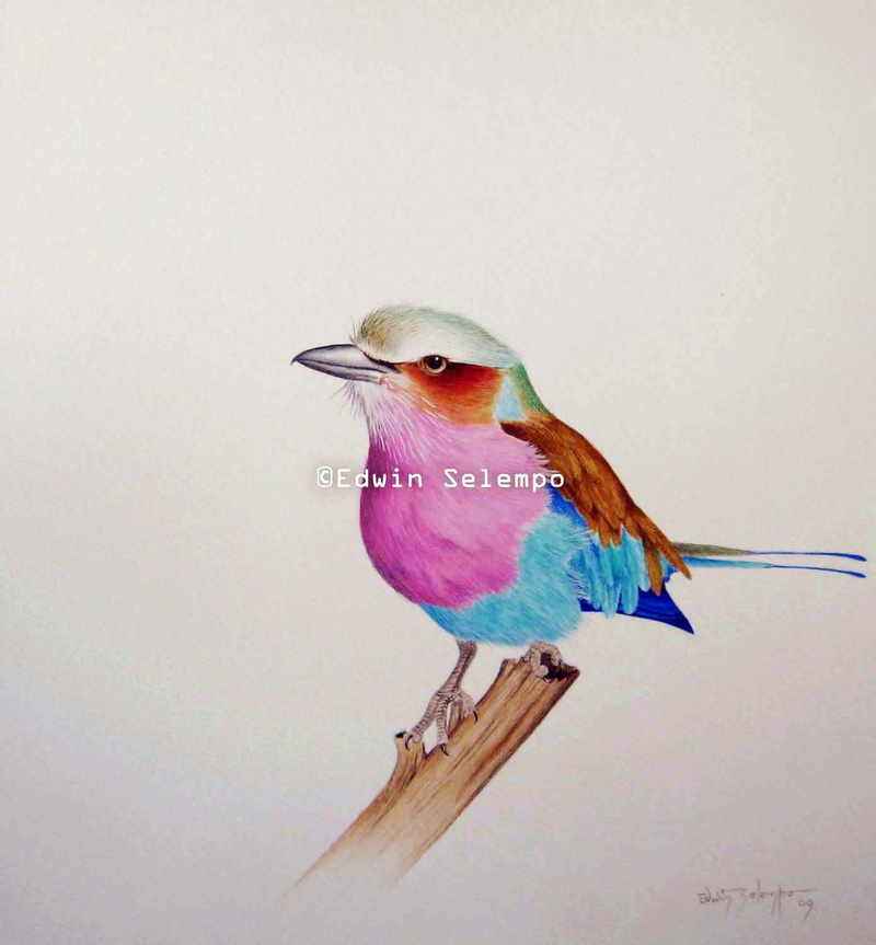 Lilac-Breasted Roller (3)