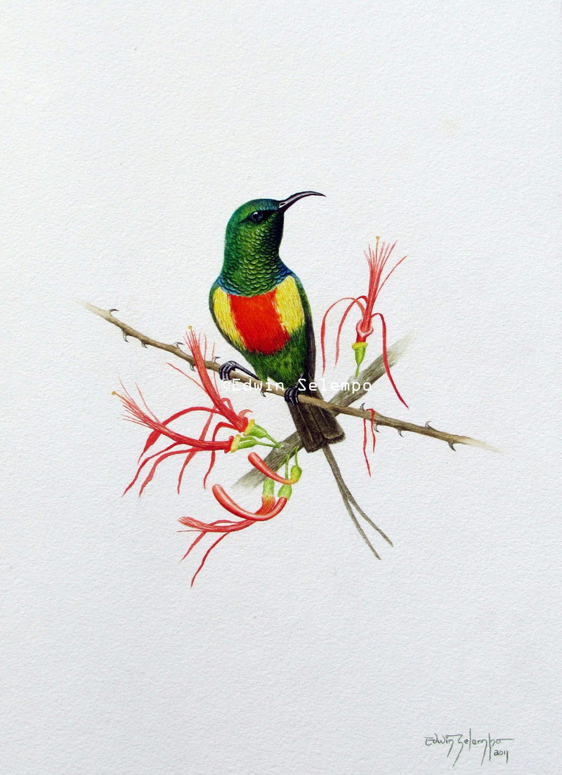 Sunbird beautiful