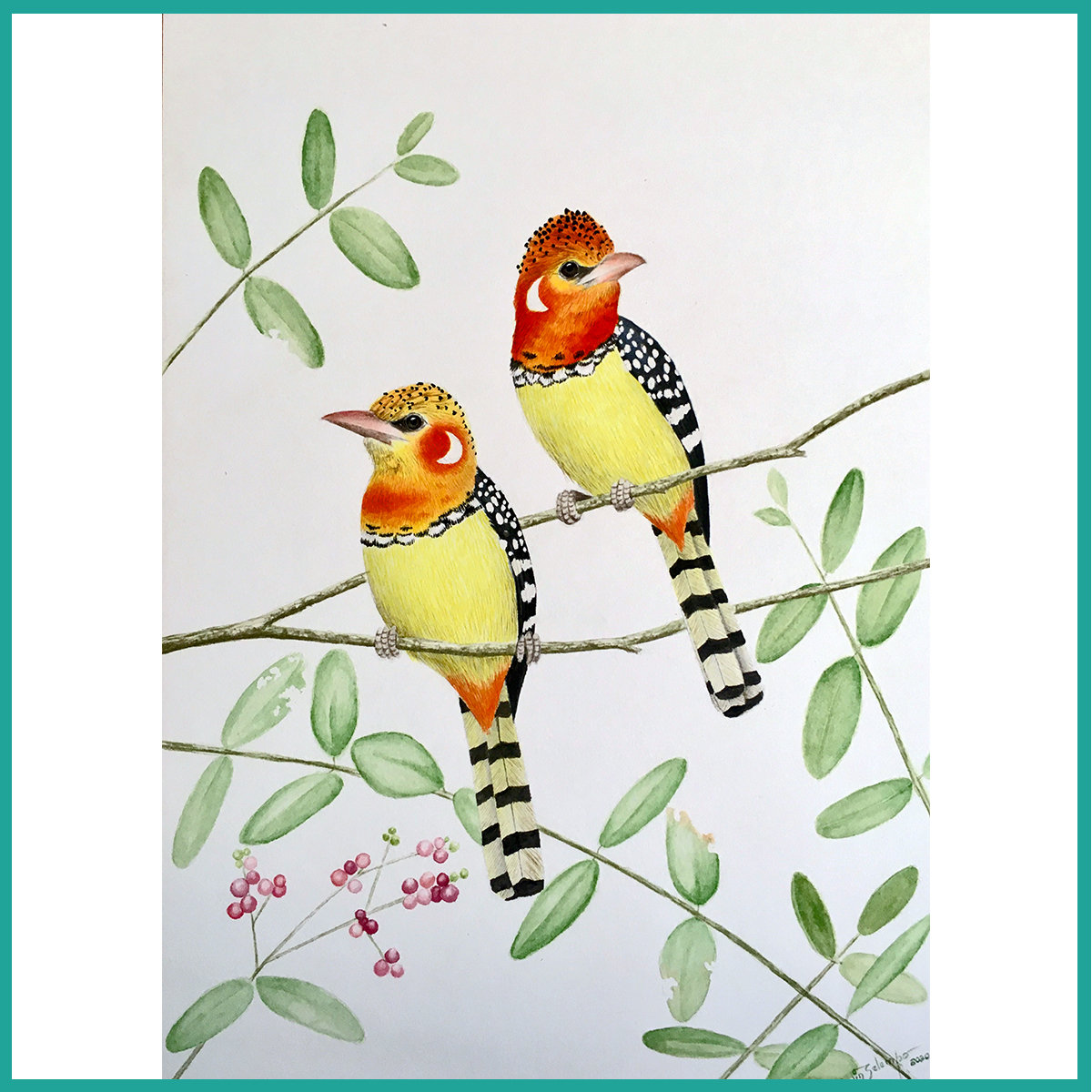 Red and yellow barbet 9.75x13.5 US$ 265